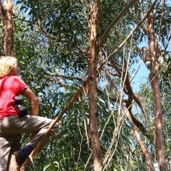 Axel klettert zum Koalashooting