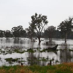Überflutete Wiese bei Sale