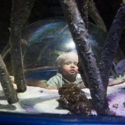 SeaLife Aquarium