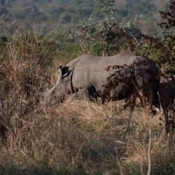 Krüger Nationalpark, South Africa